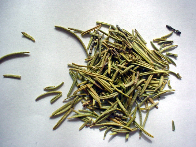 Rosemary to Improve Memory and More